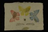 butterflies (etching) 12.5 x 18.5