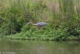 wildlife_2010