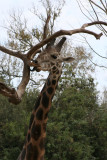 G K Grantham's Audubon Zoo