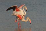 Birds of Camargue 09