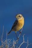 Birds in Sardinia