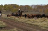 cattle drive 105.jpg