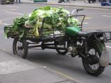 Lettuce transporation vehicle