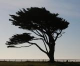 Pt Arena Tree.jpg