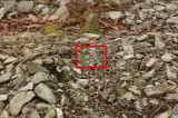 Nesting site in red overlay