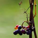Fruity-jewels