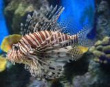 Fish_Phuket_0303.jpg