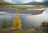 autumn is coming / the Amnundakta river emptying into Ajan lake