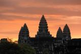 Cambodia. Lotuses of Angkor Wat at sunrise