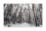 01.12.2007 Vladimir region, after snowfall