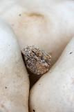 Yin mushrooms