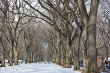 Winter at the Mall in Central Park