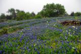 Spring 2010 in Central Texas