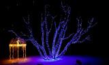 Christmas Lights - 2009