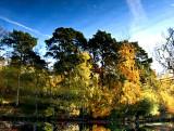 18 November - Reflected