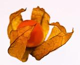 29 November - TITC: Fruit & vegetables