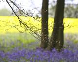 A brief drive through Wiltshire!