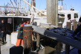 9.  Offloading some really  fresh tile fish.