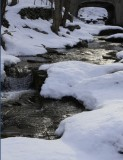 3.  Late afternoon light on a stream.