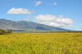 View from N. Kihei Road