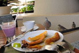 A Zebra Dove in search of a snack