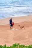 A happy beach dog