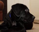 Raffa, The Blind Dog