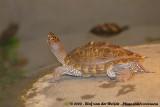 March 30, 2008: Schildpaddenopvang (NL)