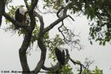 Afrikaanse Zeearend / African Fish Eagle