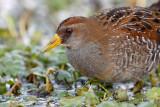 Louisiana Wildlife 2010