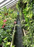 Narrow Plant Filled Aisles