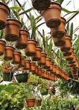Pots of Plants