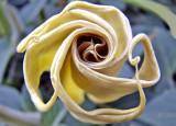 Emering Flower