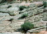 Interesting Rock Surface