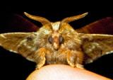 Moth-'09-13