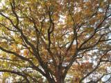 a la WK Tree Top
