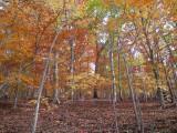 09 Fall Shoot