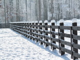 Snow on Fence 2009 December