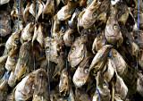 Drying Fish Heads