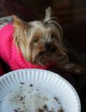 Katie finishing her Thanksgiving dinner