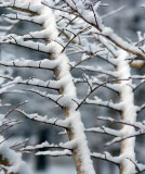 Covered branches