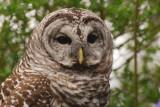 Owl watching camera