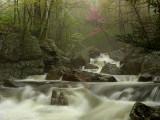 wHunting Creek in Spring11 P4261328.jpg