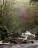 wHunting Creek in Spring7 P4261319.jpg