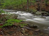 wHunting Creek in Spring2 P4261205.jpg