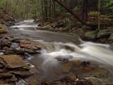wHunting Creek in Spring14 P4261160.jpg