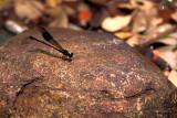 Dragonfly - 14s.jpg