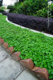 appealing green leaves