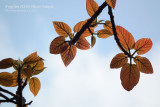 ISO100: appealing colour in sunny day (firmware 1.01)