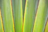 Leaves PRDC IMG07596.jpg